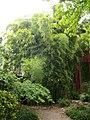 Orléans - jardin des plantes (47).jpg