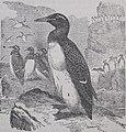 Ottův slovník naučný - obrázek č. 163.jpg