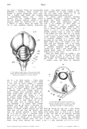Otto's encyclopedia - Page number 934 from the 20th volume of Otto's encyclopedia dealing with birds includes a diagram of the brain of a pigeon (left) and a cross-section of the eye of a night predatory bird (right).