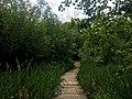 Pad door het Bronnenbos.jpg