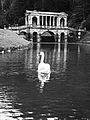 Palladian Bridge with swan, Prior Park, Bath.JPG