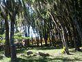 Parque de los Poetas en Mérida 02.jpg