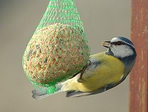Vogelfutter zur Gewichtsreduktion wikipedia en