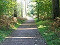 Path, Longleat Forest - geograph.org.uk - 1009242.jpg