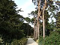 Path from Sandringham Church to Sandringham House - geograph.org.uk - 1509959.jpg