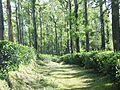 Path to Nelliyampathy Hills.jpg