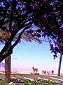 PikiWiki Israel 16099 Arad.jpg