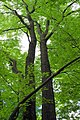 Pinchot Trail (Revisited) (3) (9446700927).jpg