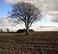 Ploughed Field and Tree - geograph.org.uk - 1221459.jpg