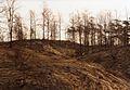 Pogorzelisko, okolice Dziewiczej Gory, 01.1993r (II).jpg