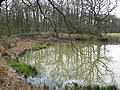 Pond near Bough Beech Reservoir - geograph.org.uk - 152672.jpg