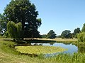 Pond near Ickworth House - geograph.org.uk - 202830.jpg