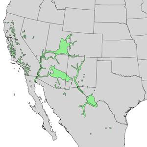 Populus fremontii - Image: Populus fremontii range map 2