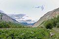 Potato fields kin Hunza.jpg