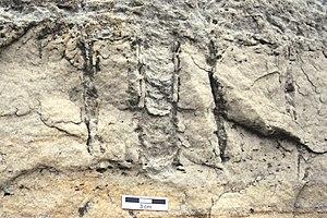 Potsdam Sandstone - Diplocraterion in the upper Potsdam Sandstone.