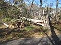 Power line damage at Target Rock National Wildlife Refuge (NY) (8152073745).jpg