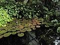 Praha, botanická zahrada, Fata Morgana - panoramio (5).jpg