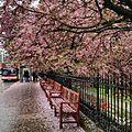 Princes Street Edinburgh hdrscape (13892834367).jpg