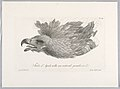 Print, Feathered Bird, 1792 (CH 18603889).jpg