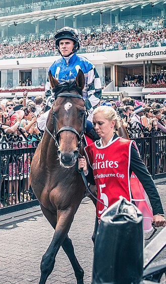 Protectionist (horse) - Protectionist before the 2014 Melbourne Cup