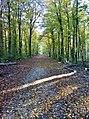 Pruga u šumi.jpg