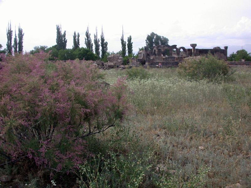 File:Psammophytes near Zvartnots Cathedral 02.JPG