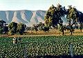 Puebla farmers.jpg