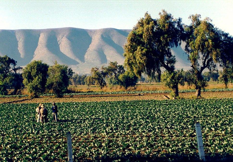 Puebla farmers
