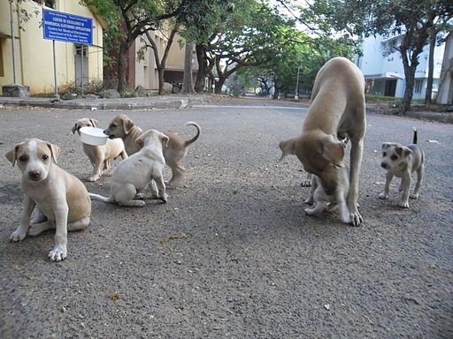 http://upload.wikimedia.org/wikipedia/commons/thumb/d/d5/Puppies_in_AU_3.JPG/512px-Puppies_in_AU_3.JPG