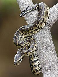 snake in trees