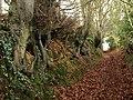 Quantock Greenway - geograph.org.uk - 1129528.jpg