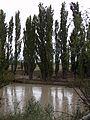 Río Chubut con turbiedad, febrero 2016 10.JPG