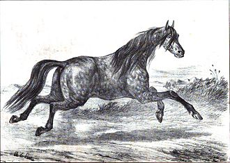 "Akhal-Teke - 1848 French image of a ""Turkmene"" horse"