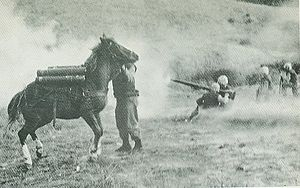 Sergeant Reckless - Reckless under fire in Korea