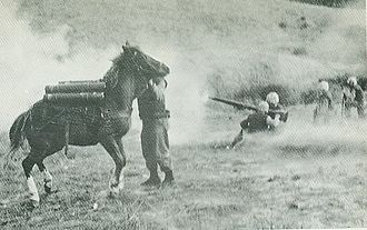 Sergeant Reckless - Reckless under fire in Korea