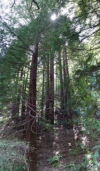 Redwood Regional Park - Image: Redwood Regional