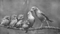 Reed-chipping-sparrow-family.png