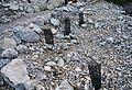 Reforestació al Puig Campana.jpg