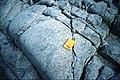 Reluctant Island foliated granodiorite.jpg