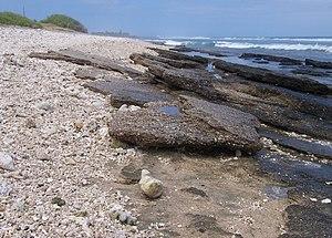 Beachrock - Beachrock along Réunion island seashore