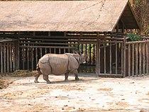 Rhino CMZ.jpg