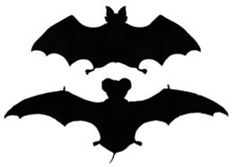 Zwei Fledermaus-Silhouetten.  Die Spitze, eine Hufeisenfledermaus, hat kürzere, breite Flügel.  Die zweite, eine Fledermaus mit freiem Schwanz, hat sehr lange und schmale Flügel.