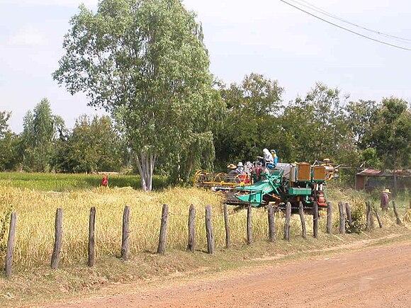 dbe47656564 Hvor rishøst tidligere var håndarbejde, er den mange steder i de senere år  blevet effektiviseret