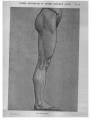 Richer - Anatomie artistique, 2 p. 101.png
