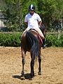 Riding a Horse Backwards 1110821.jpg