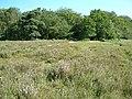 Ridley Wood - geograph.org.uk - 27773.jpg