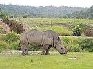 Rinoceronte blanco PTHN.jpg