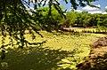 Rio Piauí - Bosque de Algarobas 07.JPG