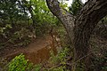 Riparian areas are an important part of the overal ecosystem at the ranch. (25017877351).jpg