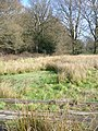 Rivulet by Woodland Farm - geograph.org.uk - 340557.jpg